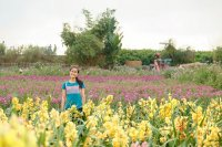 łąka wykorzysująca agrowłókninę